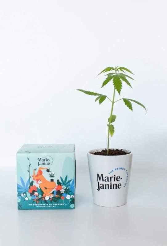 Kit de plantation de Chanvre La Rouquine - Maison James Close à Antibes