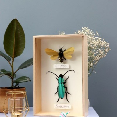 Rosalia Beetle en papier à assembler